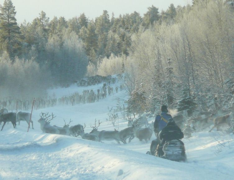 Traffic Jam In Lapland